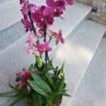 aranjament-cu-orhidee-si-guzmania_3043_1_1550680081.jpg