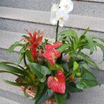 aranjament-in-cos-cu-plante-de-interior_3045_1_1550680084.jpg