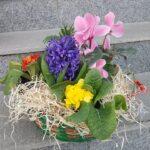 cos-cu-flori-de-primavara-3041_3041_1_1550679624.jpg