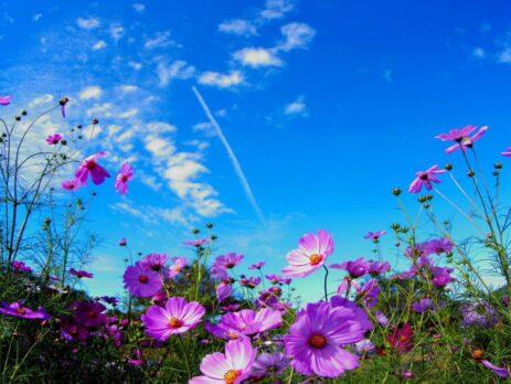 Aer, descoperiți plantele care purifică atmosfera din interiorul casei
