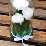 cupola cu 3 trandafiri criogenati