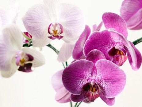 Orhidee, cum puteți profita la maxim de aceste flori deosebite și elegante