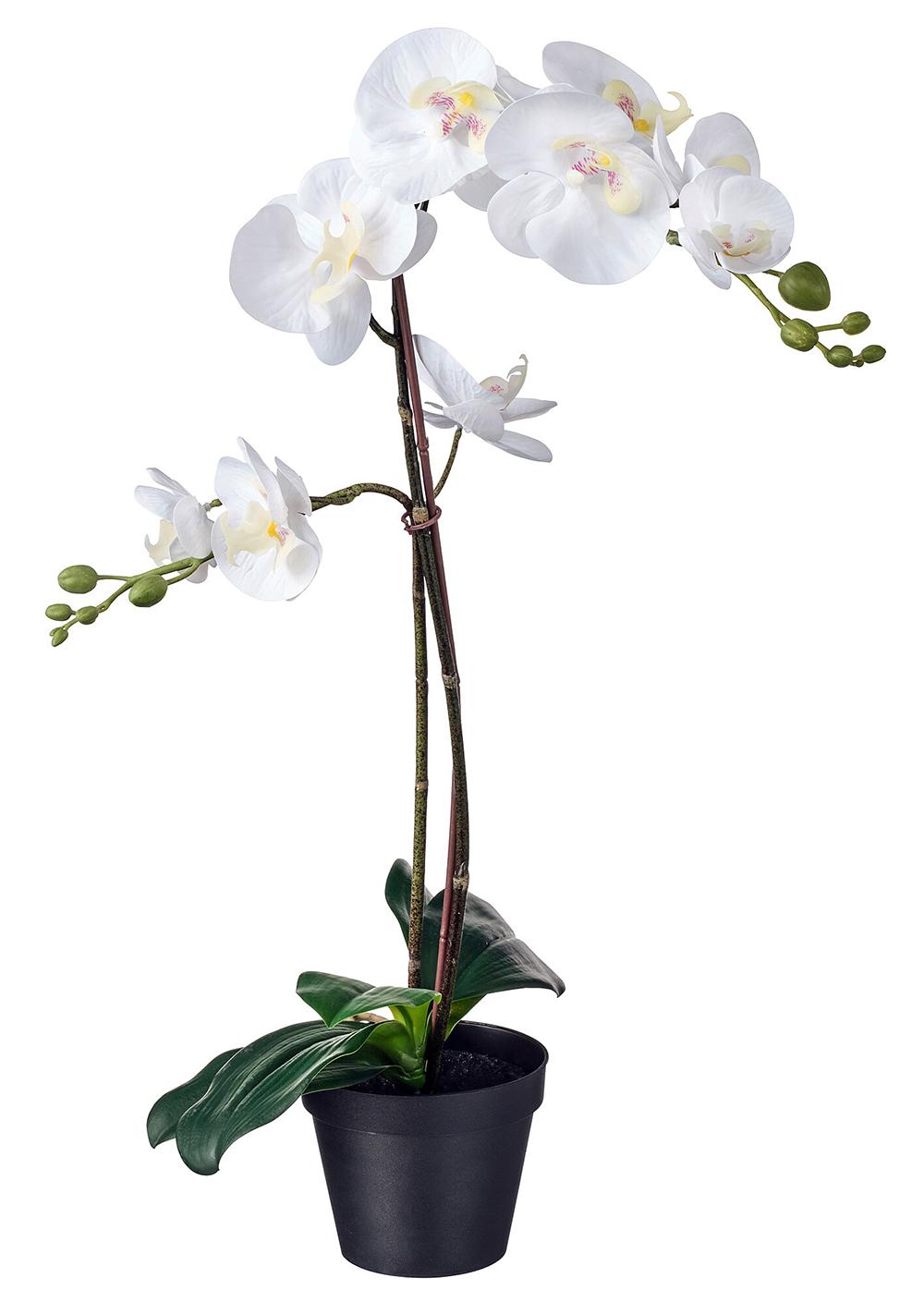 Orhidee Craiova