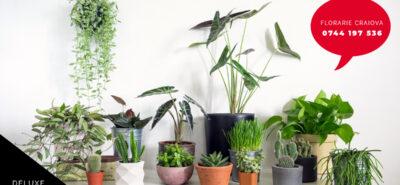 Planta de casă, ghidul nostru complet pentru cele mai bune alternative