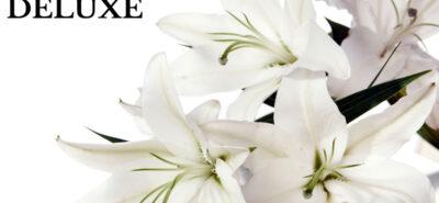 Crini, un ghid despre culoarea, semnificația și simbolismul acestor flori