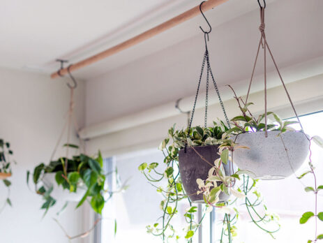Decorare, sfaturi utile pentru a maximiza prezența unor plante de interior