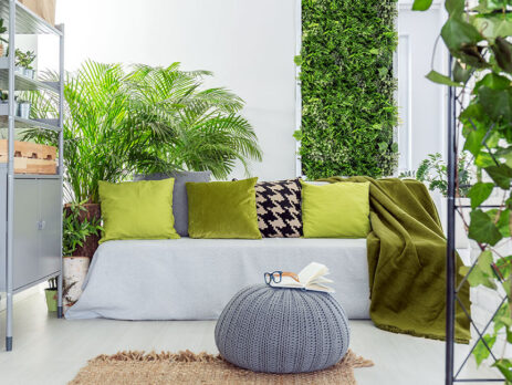 Plante de interior, ideile de decorare cu plante devin tot mai populare