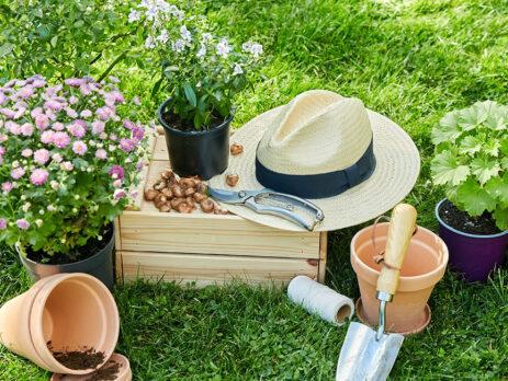 Vara, cum trebuie să ne îngrijim de plantele cu flori în sezonul cald